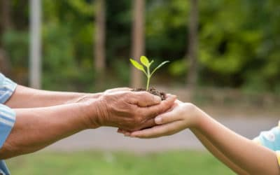 How to ensure your charity remains sustainable?